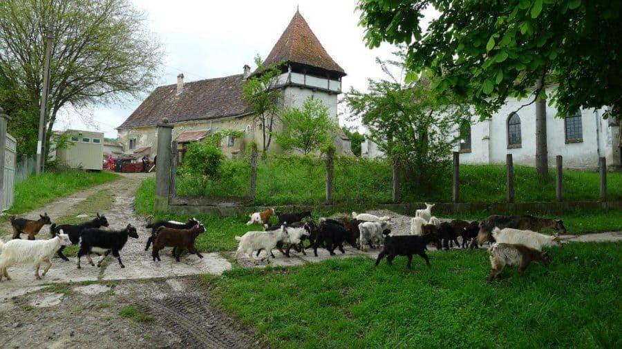 2019-04-24-Renovierung-Kirchenburgen03-RWolfgangWeigl-web